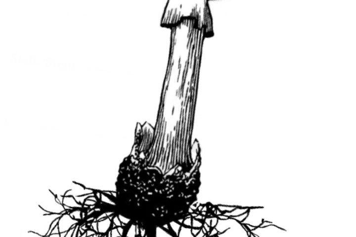 A Fungal Future